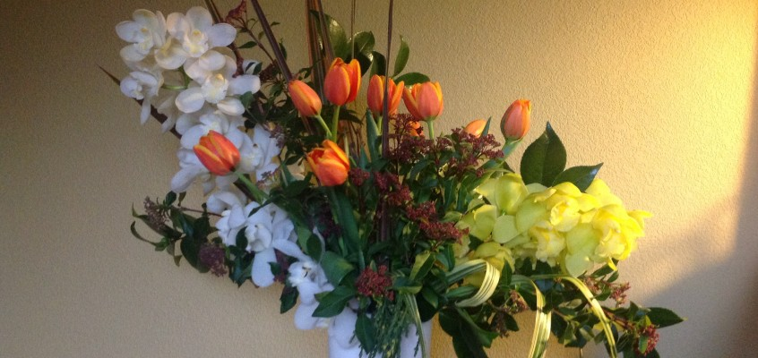Celebrating  the Season: cymbidiums & tulips!
