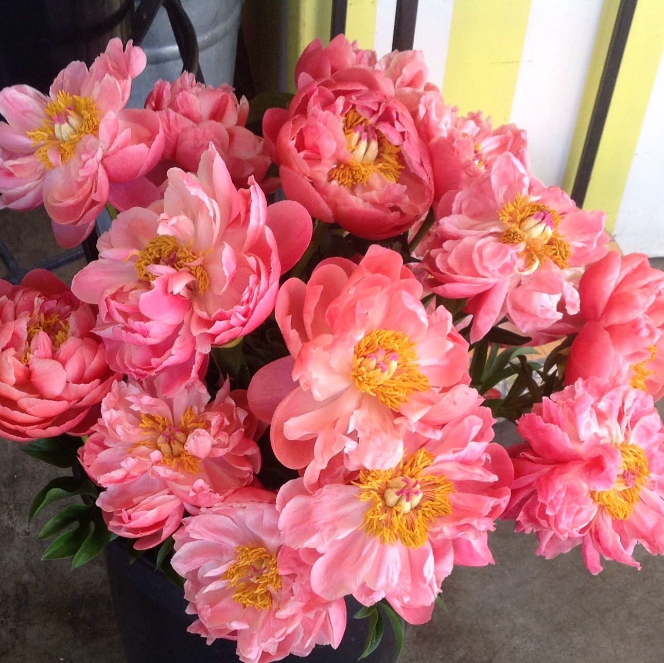 Peonies Season celebrate the season for peonies! | tranquility lane flower & garden