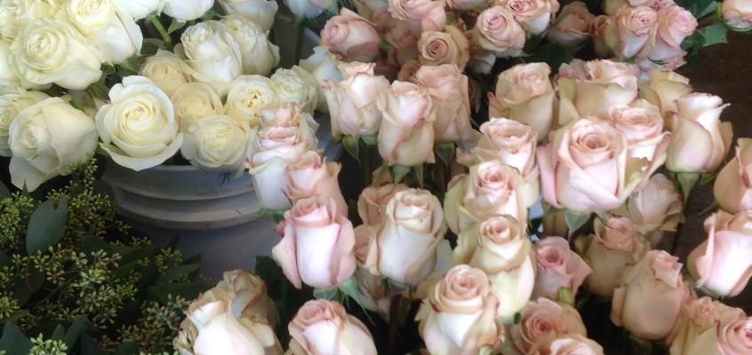 Roses, roses, roses!