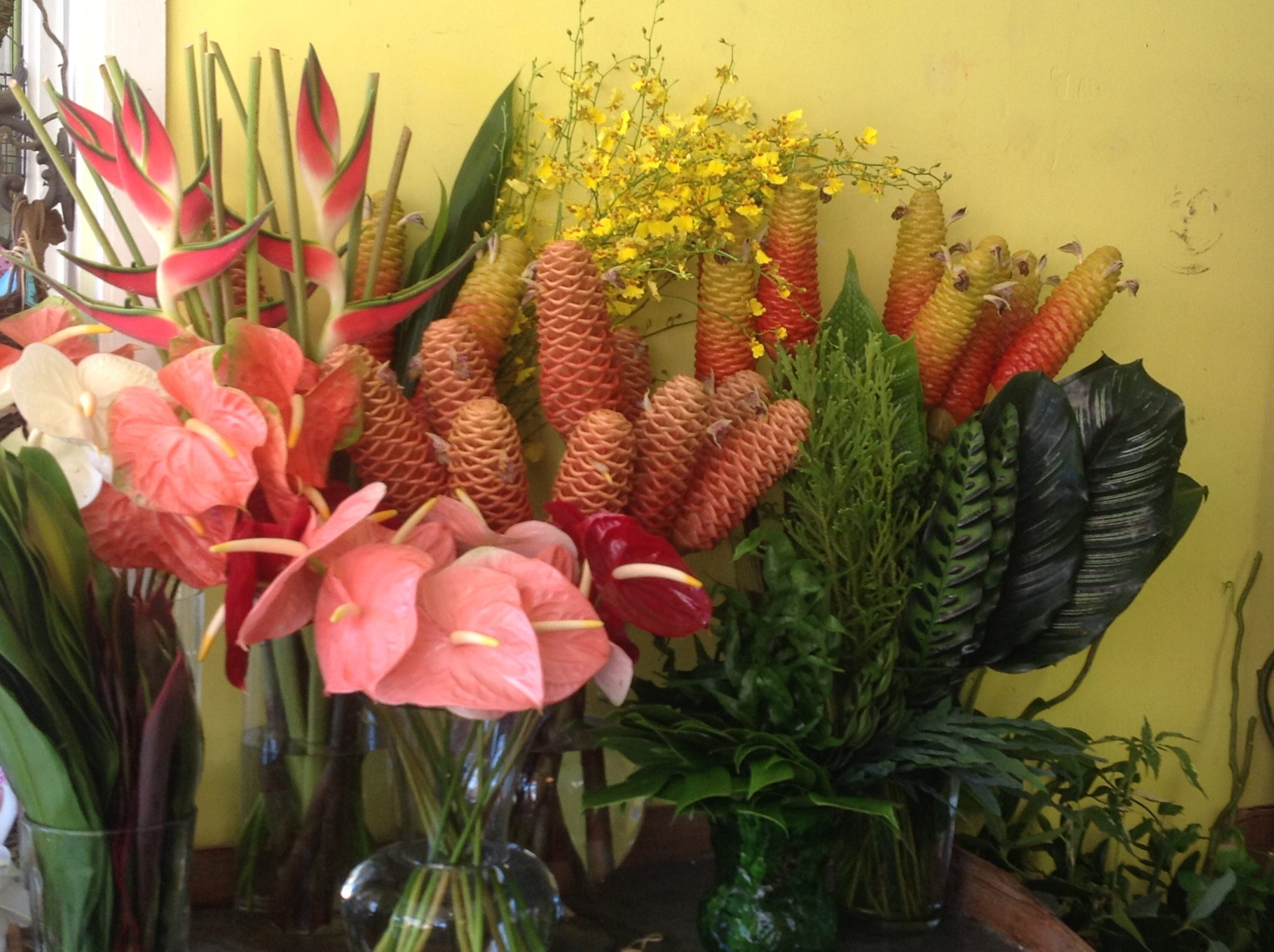 Tropicals from Hawaii!