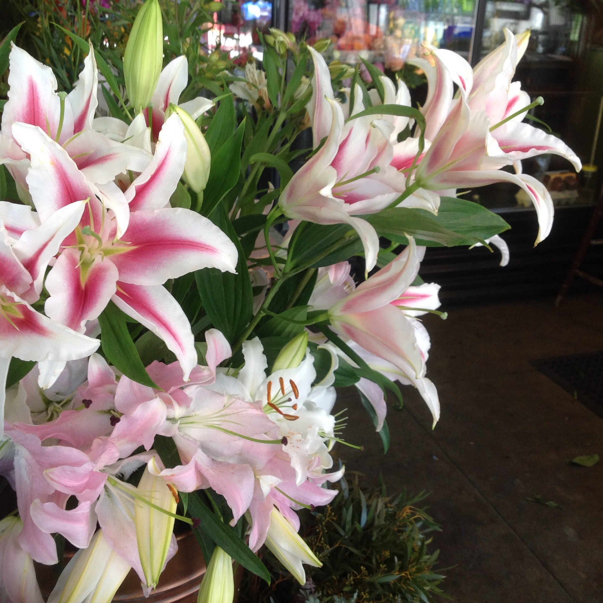 Lillies, A mass of fragrance and beauty