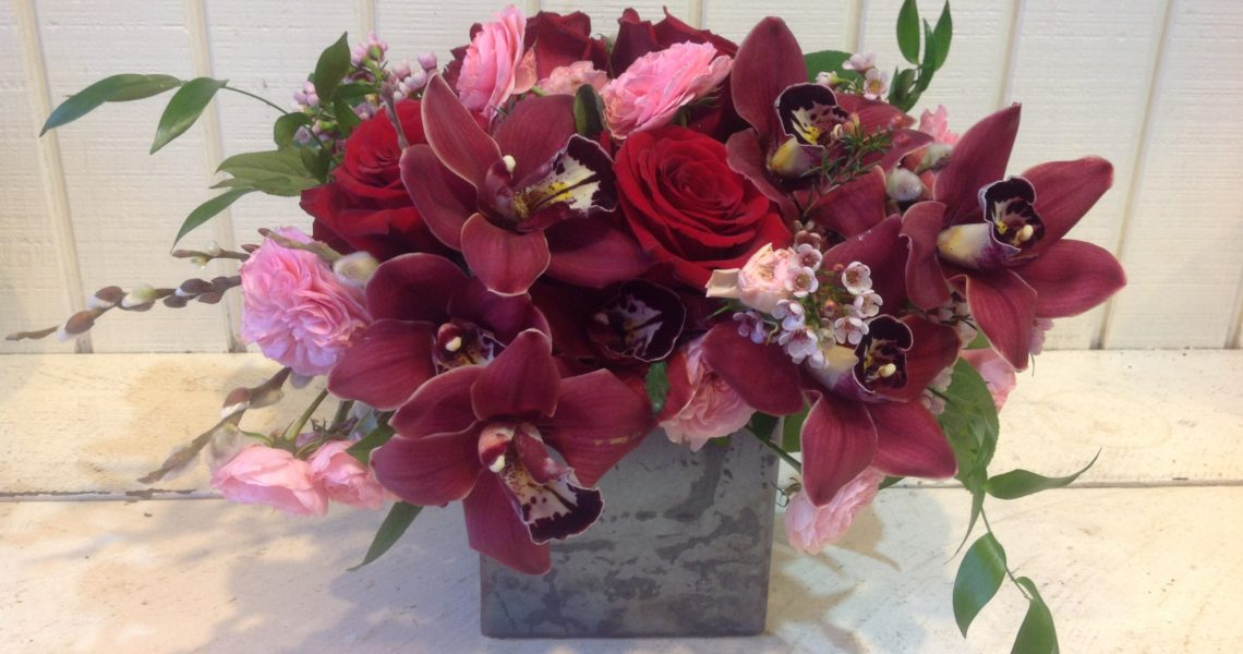 burgundy cymbidium